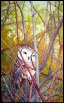 Saw Whet Owl in Thicket